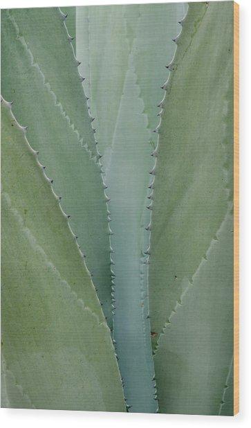Agave Abstract. Wood Print