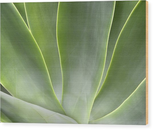 Agave Leaves Wood Print