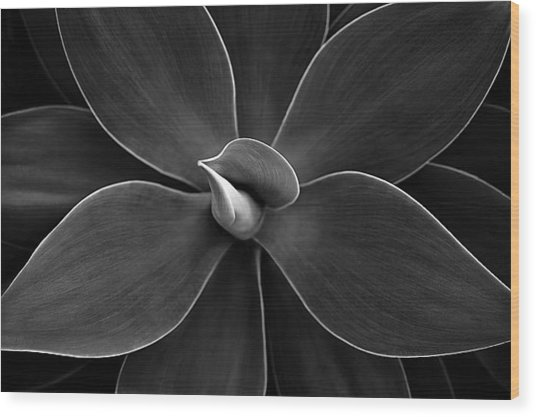 Agave Leaves Detail Wood Print