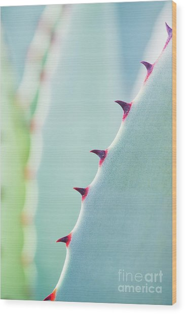 Agave Parryi Abstract Wood Print