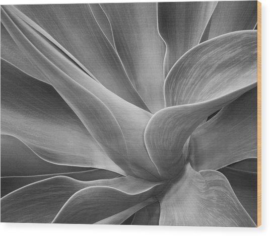 Agave Shadows And Light Wood Print