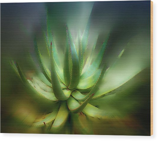Agave Sunrise Wood Print