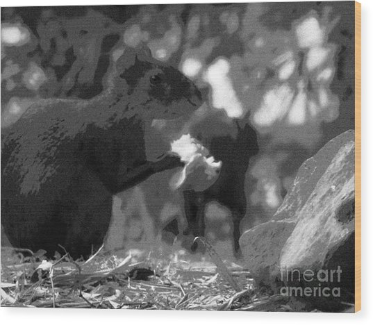 Agouti At Supper Wood Print