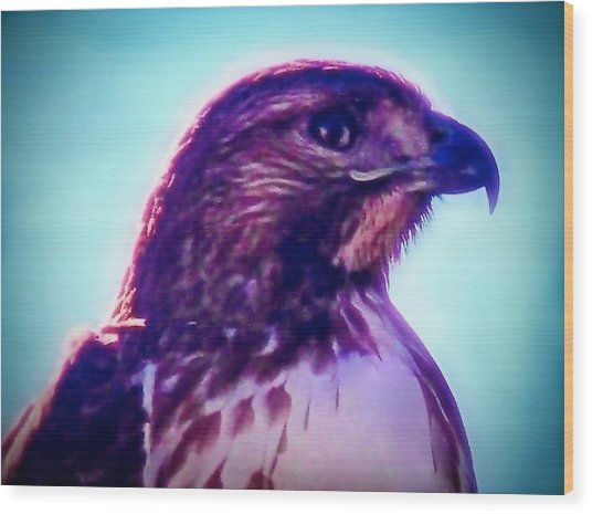 Ak-chin Red-tailed Hawk Portrait Wood Print
