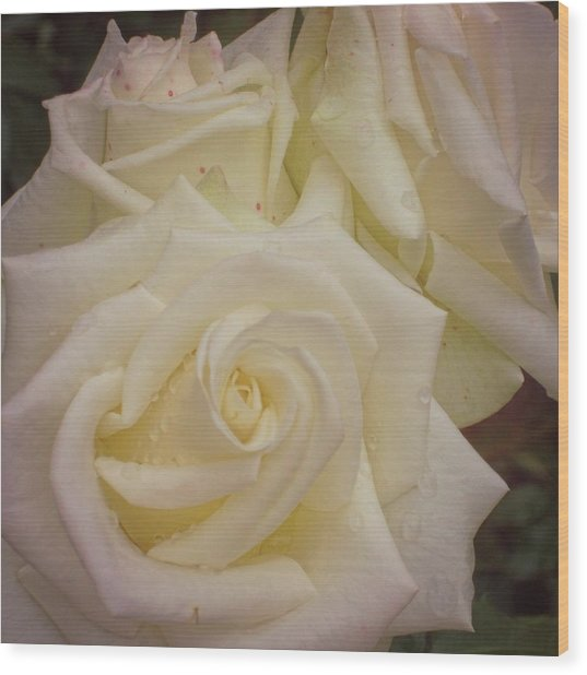 Alabaster Roses Wood Print by JAMART Photography