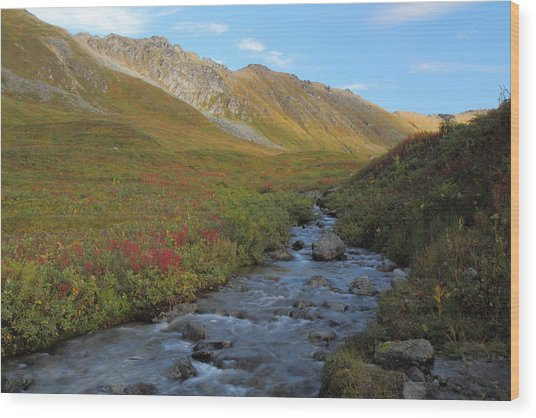Alaska Fireweed And Willow Creek Along Hatcher Pass Road Wood Print