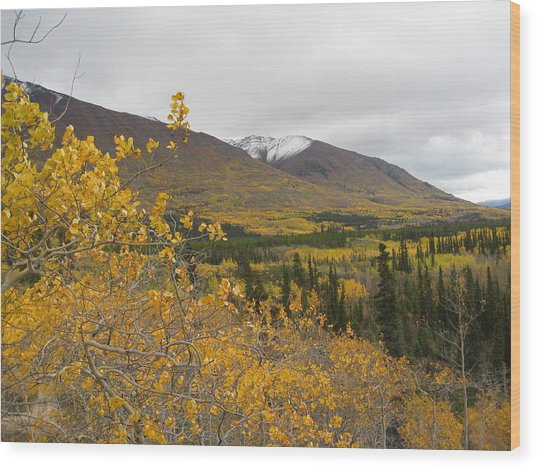 Alaska Frontier Wood Print by Kimber  Butler