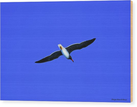 Albatros Wood Print by Chaza Abou El Khair