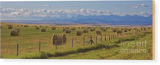 Wood Print featuring the photograph Alberta by Brad Allen Fine Art