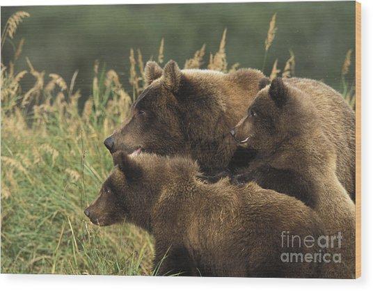 Alert Bear Family Wood Print by Tim Grams