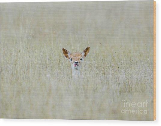 Alert Fallow Deer Fawn - Dama Dama - Laying Long In The Long Grass Wood Print