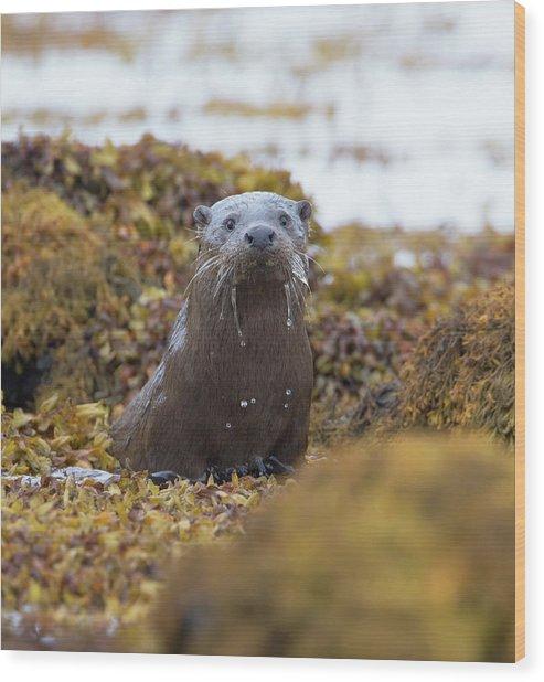 Alert Female Otter Wood Print