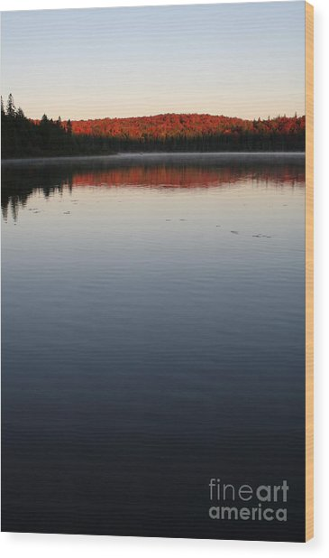 Algonquin First Light Wood Print by Chris Hill