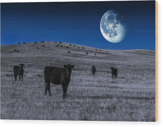 Alien Cows Wood Print