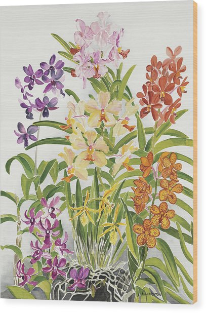 Alis Orchids Wood Print by Anji Worton