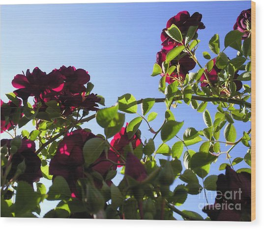 All About Roses And Blue Skies I Wood Print by Daniel Henning