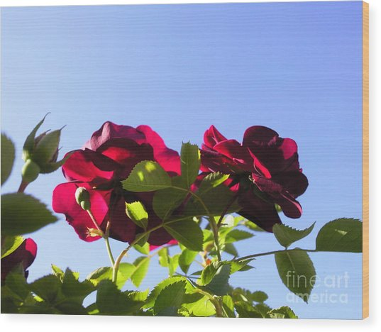 All About Roses And Blue Skies II Wood Print by Daniel Henning