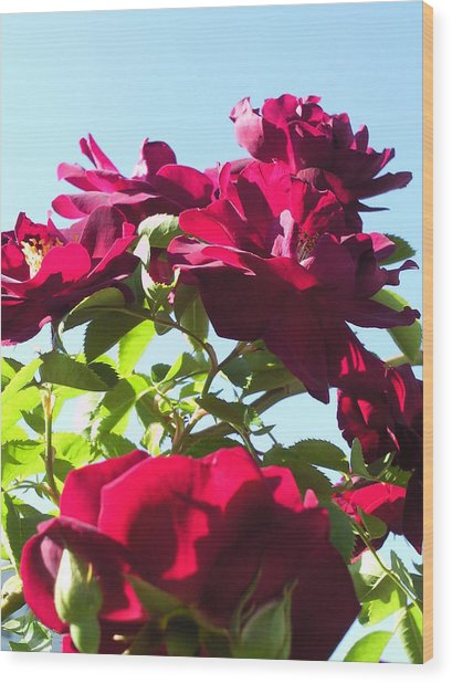 All About Roses And Blue Skies IIi Wood Print by Daniel Henning