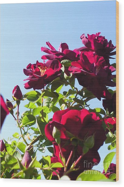 All About Roses And Blue Skies Ix Wood Print by Daniel Henning