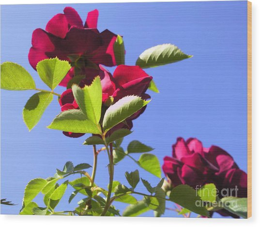 All About Roses And Blue Skies Vi Wood Print by Daniel Henning