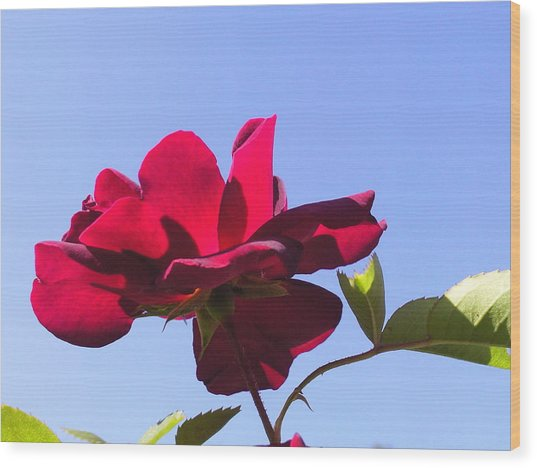 All About Roses And Blue Skies Viii Wood Print by Daniel Henning