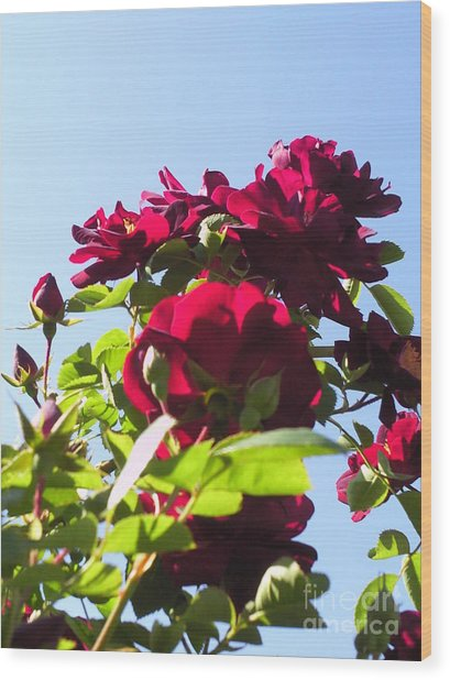 All About Roses And Blue Skies X Wood Print by Daniel Henning