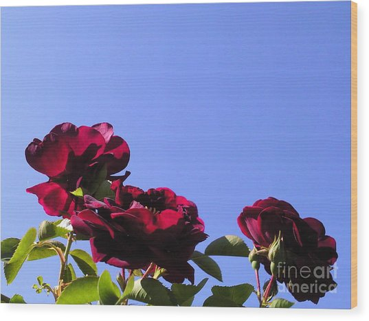 All About Roses And Blue Skies Xi Wood Print by Daniel Henning