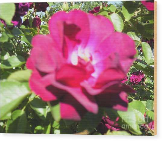 All About Roses And Green Leaves I Wood Print by Daniel Henning