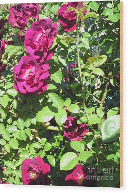 All About Roses And Green Leaves IIi Wood Print by Daniel Henning