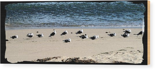 All My Gulls In A Row Wood Print by Ellen Lerner ODonnell