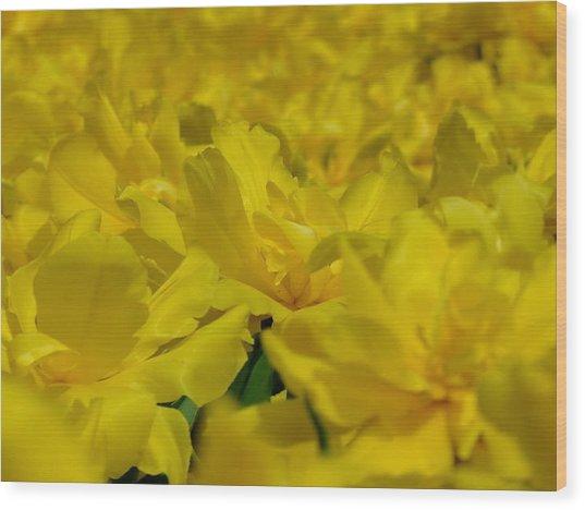 All Yellow Wood Print by Simona Stroescu