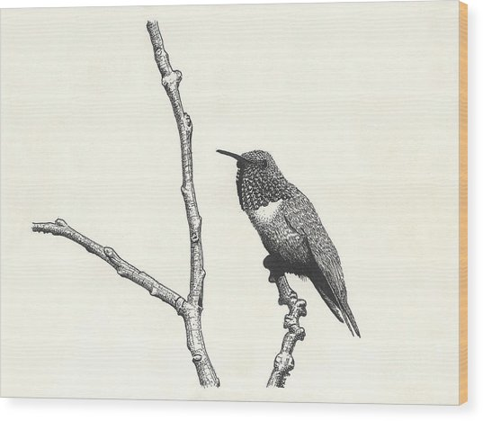 Allen's Hummingbird Wood Print