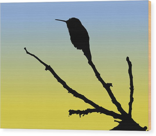 Allen's Hummingbird Silhouette At Sunrise Wood Print