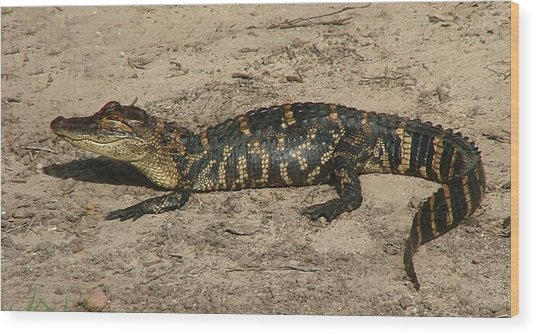Alligator Baby Wood Print