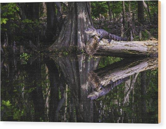 Alligators The Hunt, New Orleans, Louisiana Wood Print