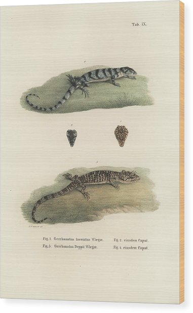 Alligator Lizards Wood Print