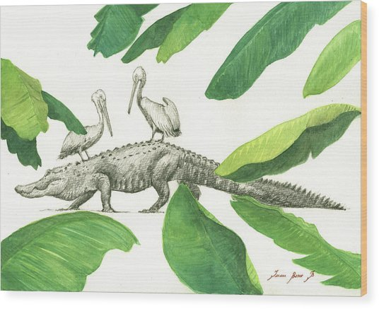 Alligator With Pelicans Wood Print