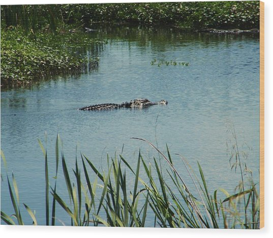 Alligators Wood Print by Nereida Slesarchik Cedeno Wilcoxon