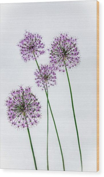 Alliums Standing Tall Wood Print