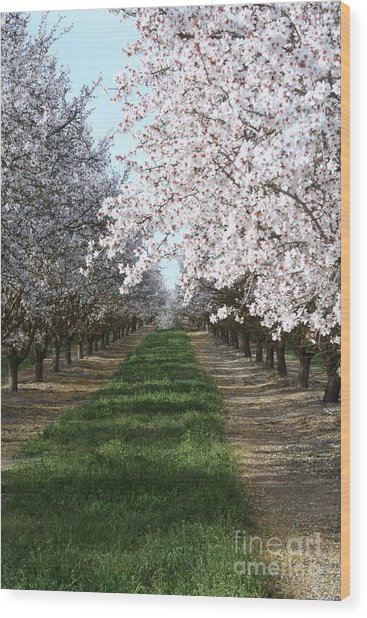 Almond Shadows Wood Print by Don Robson