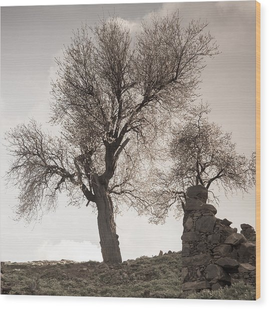 Almond Trees In Abandoned Village Again Wood Print