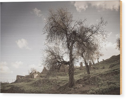 Almond Trees In Abandoned Village Wood Print