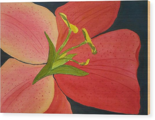Almost A Tiger Lily Wood Print