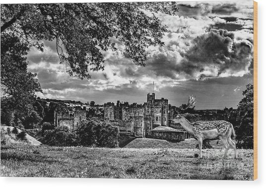 Alnwick Castle And Fallow Deer Wood Print