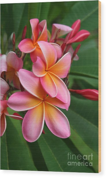Aloha Lei Pua Melia Keanae Wood Print