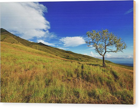 Wood Print featuring the photograph Along The Mountain Slopes by Pradeep Raja Prints
