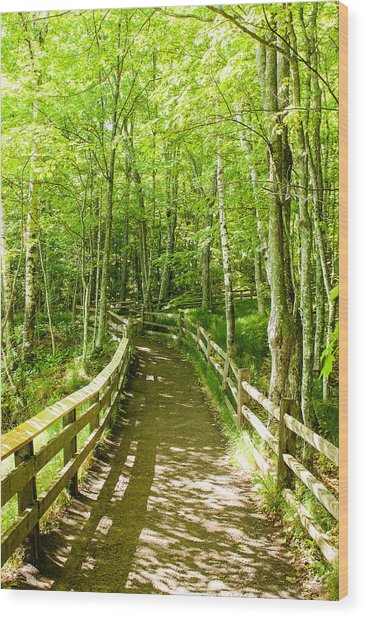 Wood Print featuring the photograph Along The Path by Rosemary Legge