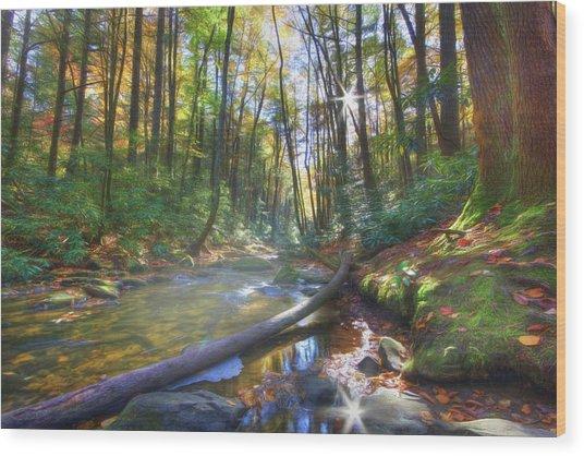 Along The Trail In Georgia Wood Print