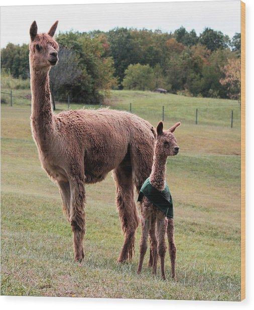 Alpaca And Cria Wood Print