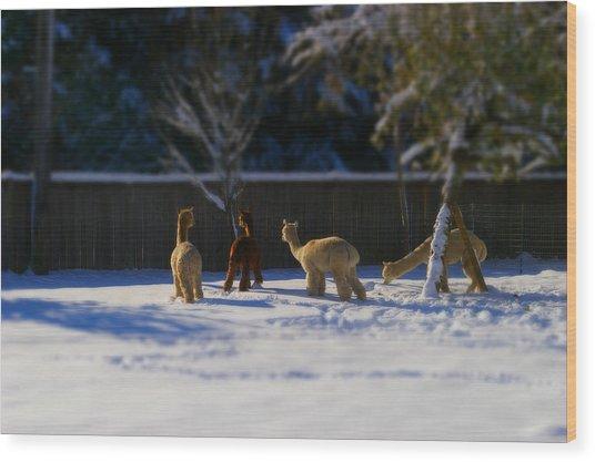 Alpacas In The Snow Wood Print